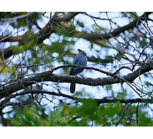 Forest Bird Photographic Print