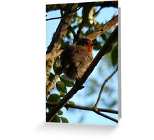 Fluffy Robin - late May Greeting Card