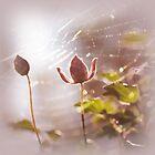 Web sparkle by SuzanAlmond