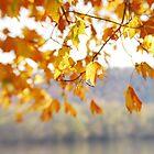 Susquehanna Leaves by Lynn McCann