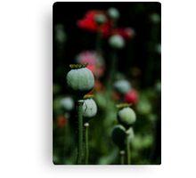 Opium Seeds Canvas Print