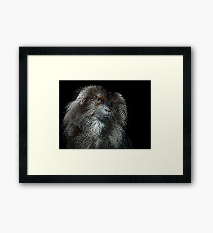 Captive Framed Print