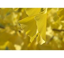 wings of gold Photographic Print