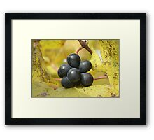 havin' grape fun? Framed Print