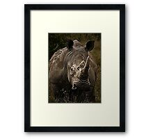 White Rhino - Face to Face Framed Print