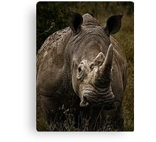 White Rhino - Face to Face Canvas Print