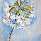 Spring Blossom by EvaBridget