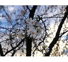 Tree Flowers Photographic Print