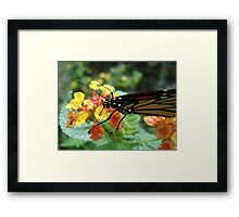 Sip from a Golden Cup Framed Print