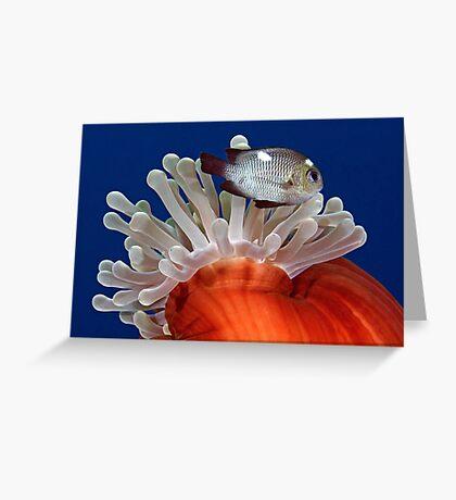 False Nemo Greeting Card