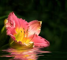 Lily In Water by Kathy Weaver
