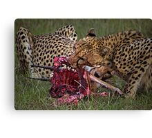 Cheetah's Meal Canvas Print