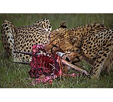 Cheetah's Meal Photographic Print