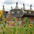 Bedzed sunflowers by lukasdf