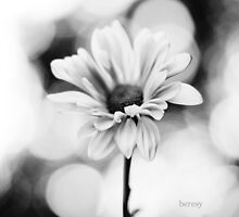 Black and White Daisy by beresy