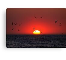 Sunset & Birds Canvas Print