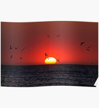 Sunset & Birds Poster