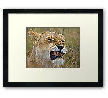 Lion's Mimic Framed Print
