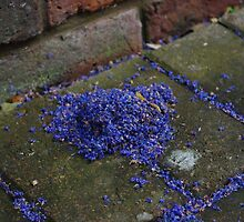a heap of blue petals by lukasdf