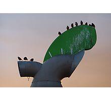windcowl starlings Photographic Print