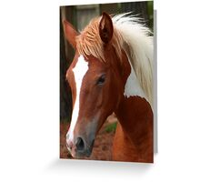 Storm Filly Greeting Card