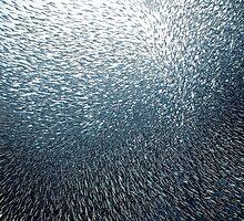 Sardines Firework by Henry Jager