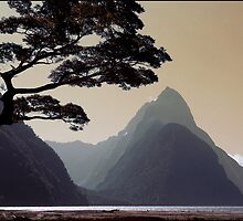 Milford Sound New Zealand by Albert Sulzer
