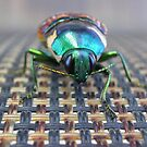 Green Beetle by TeAnne
