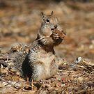 Squirrel Find by riverangel51