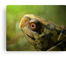 Gulf Coast Box Turtle Canvas Print