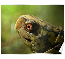 Gulf Coast Box Turtle Poster