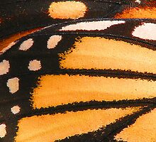 Monarch Butterfly Wing Macro by Chris Brown