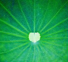Lotus leaf by jenheal