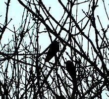 Blackbirds by sidfletcher