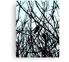Blackbirds Canvas Print