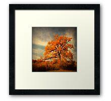 Orange Season Framed Print