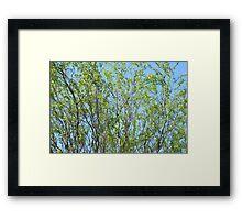Winding Willow Framed Print