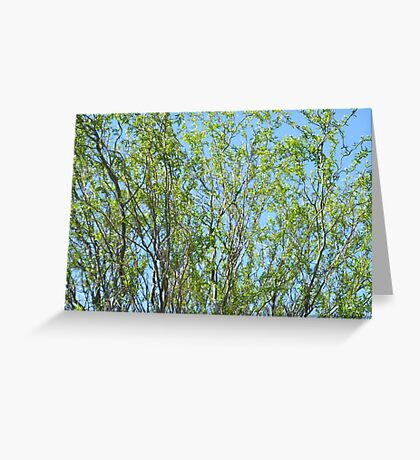 Winding Willow Greeting Card