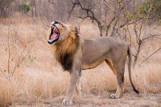 The Lion's Roar by Erik Schlogl