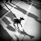 dog and shadows by Marianna Tankelevich