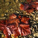 Leaves at the Water's Edge by Virginia Shutters