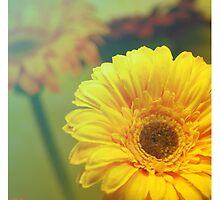 Color flowers by Elena Ledesma