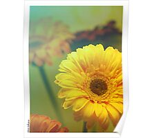 Color flowers Poster