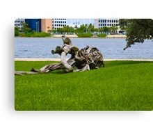 Driftwood of Miami Florida Canvas Print