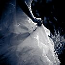 Wedding Dress by Christine  Wilson Photography