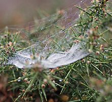 Web by Mark Hossack