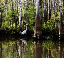 Great Blue Heron by Kevin McLeod
