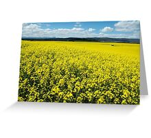 Canola field near Campbell town Greeting Card