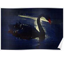 Black Swan at Twilight Poster