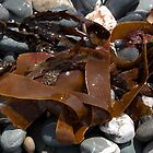 Seaweed by AlexSaunders